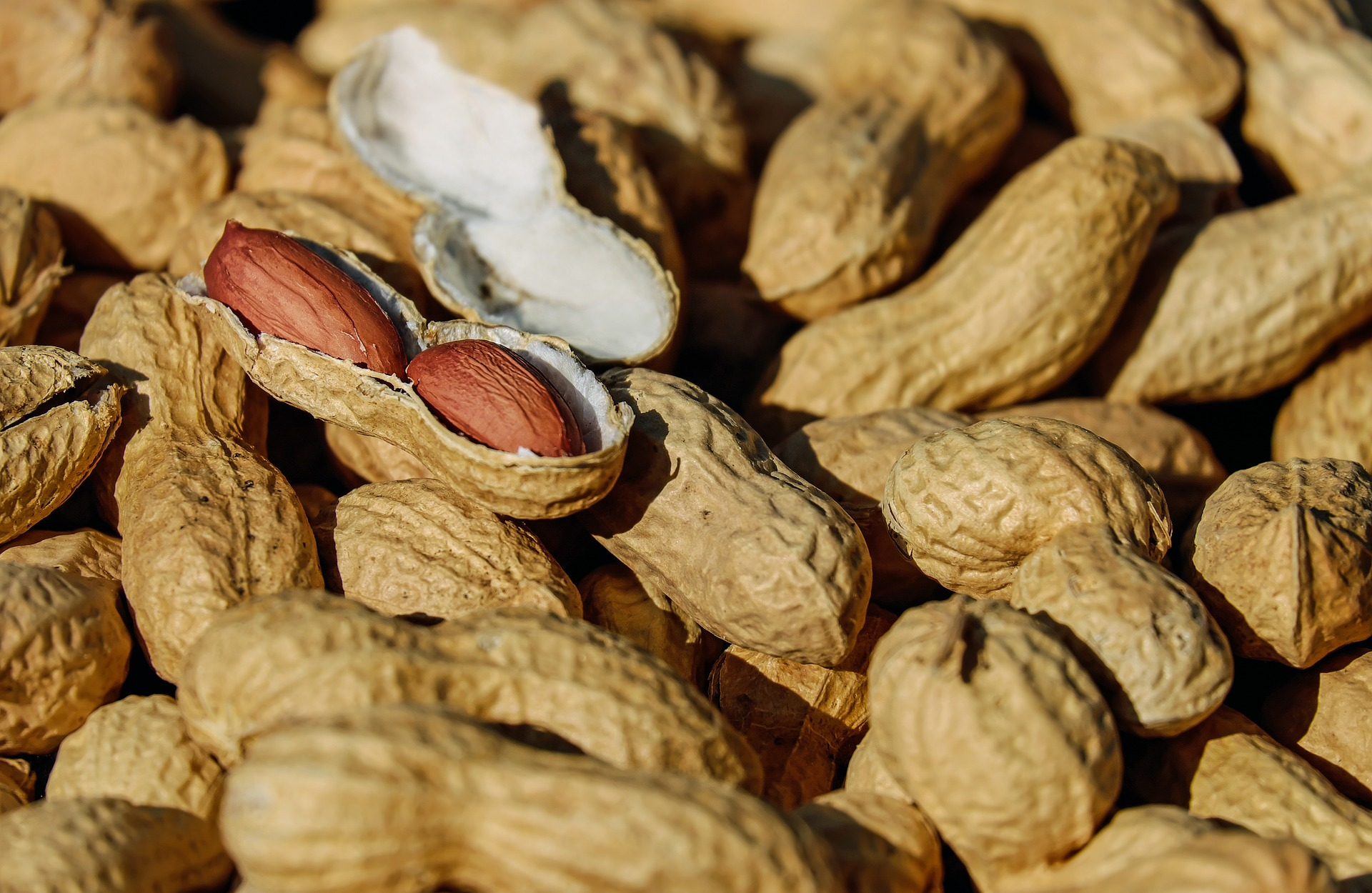 10 foods that aren't what you think they are_peanuts