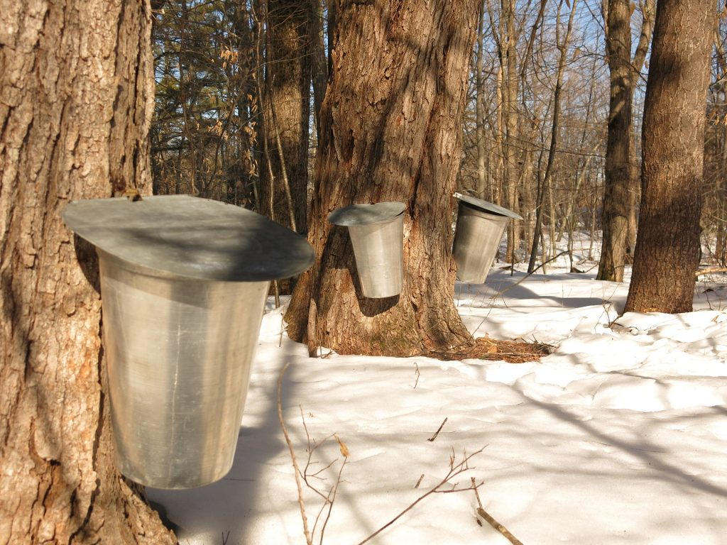 10 fun facts you never knew about maple syrup_3