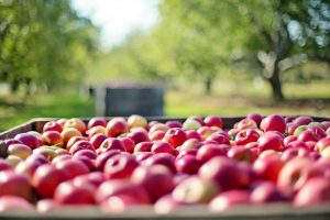 All the produce in season in July_apples