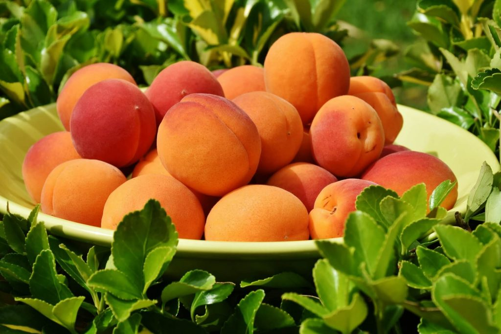 All the produce in season in July_apricots