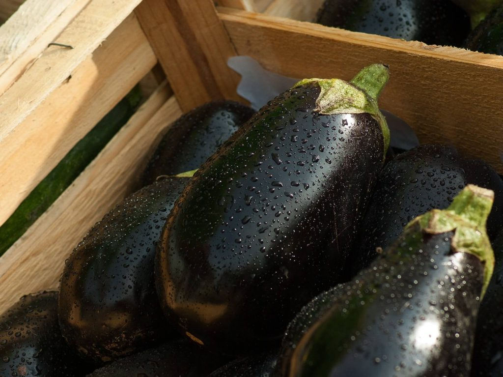 All the produce in season in July_eggplant