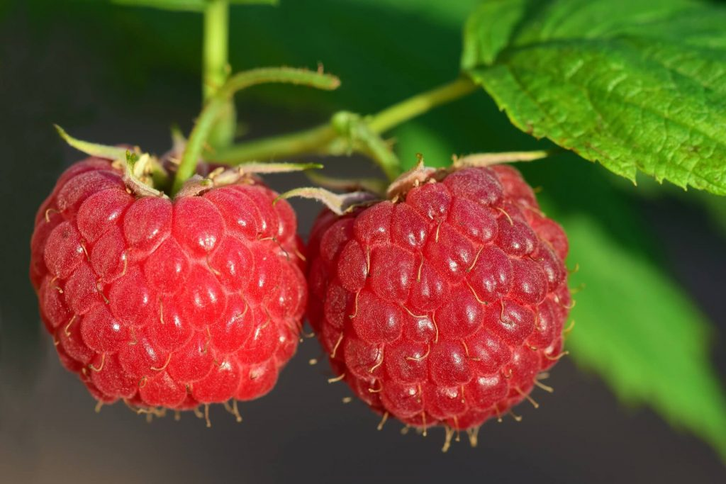 All the produce in season in July_raspberries