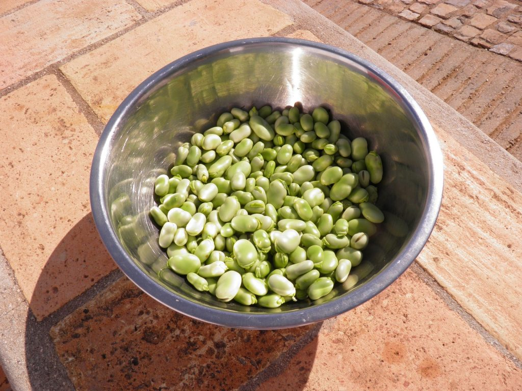 April produce guide What's in season_fava beans