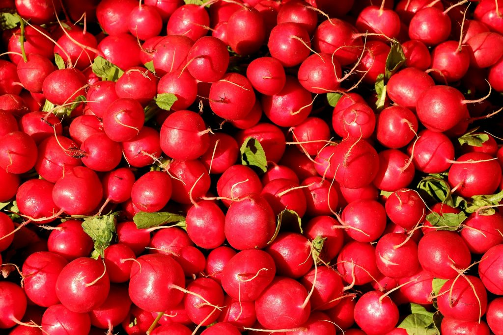 April produce guide What's in season_radishes