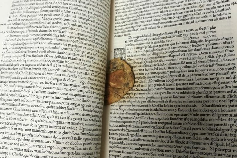 Half-eaten cookie found inside 1529 manuscript