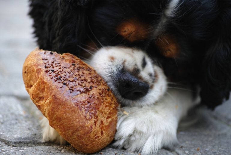 Human foods that you shouldn't feed your dog, according to a veterinarian