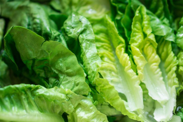 Stay away from Romaine Lettuce, report warns