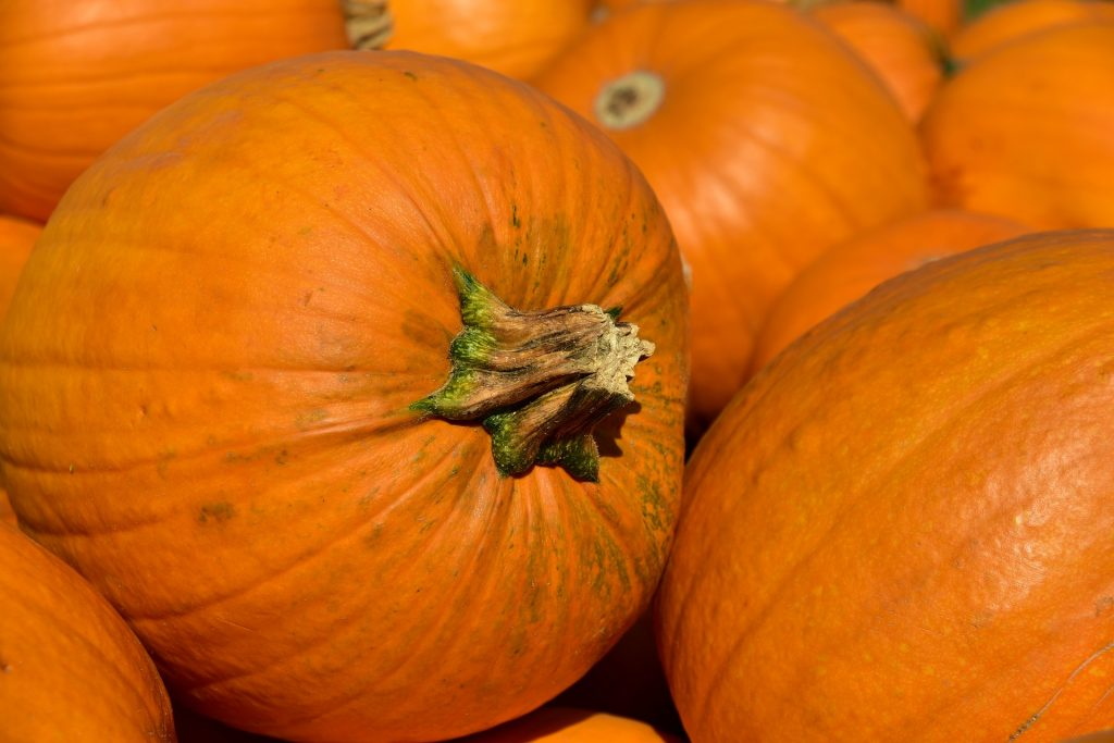 What produce is in season in September?_pumpkin