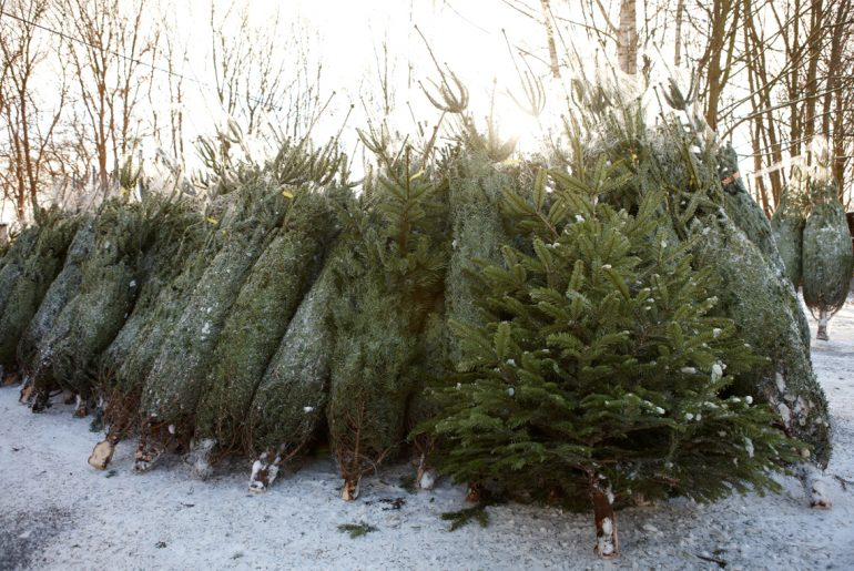 What the Christmas tree shortage means for your holiday